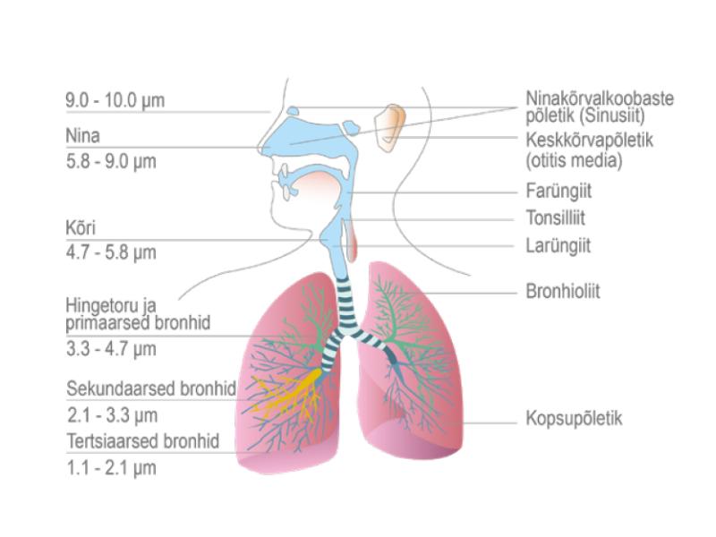 inhalaatori toime