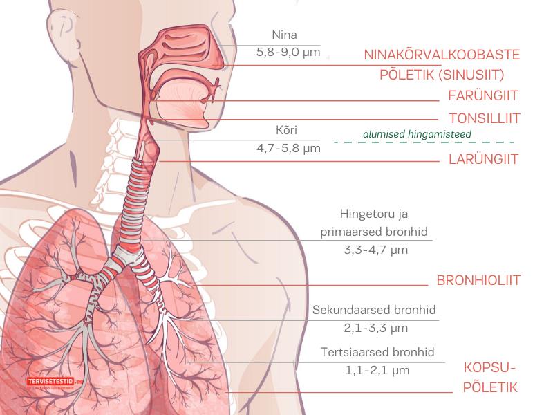 hingamisteed ja inhalaator